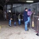Pferde - interessant für jung und alt